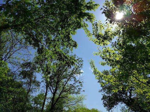 Darmowe zdjęcie z galerii z błękitne niebo, natura, patrzenie w górę, piękno natury