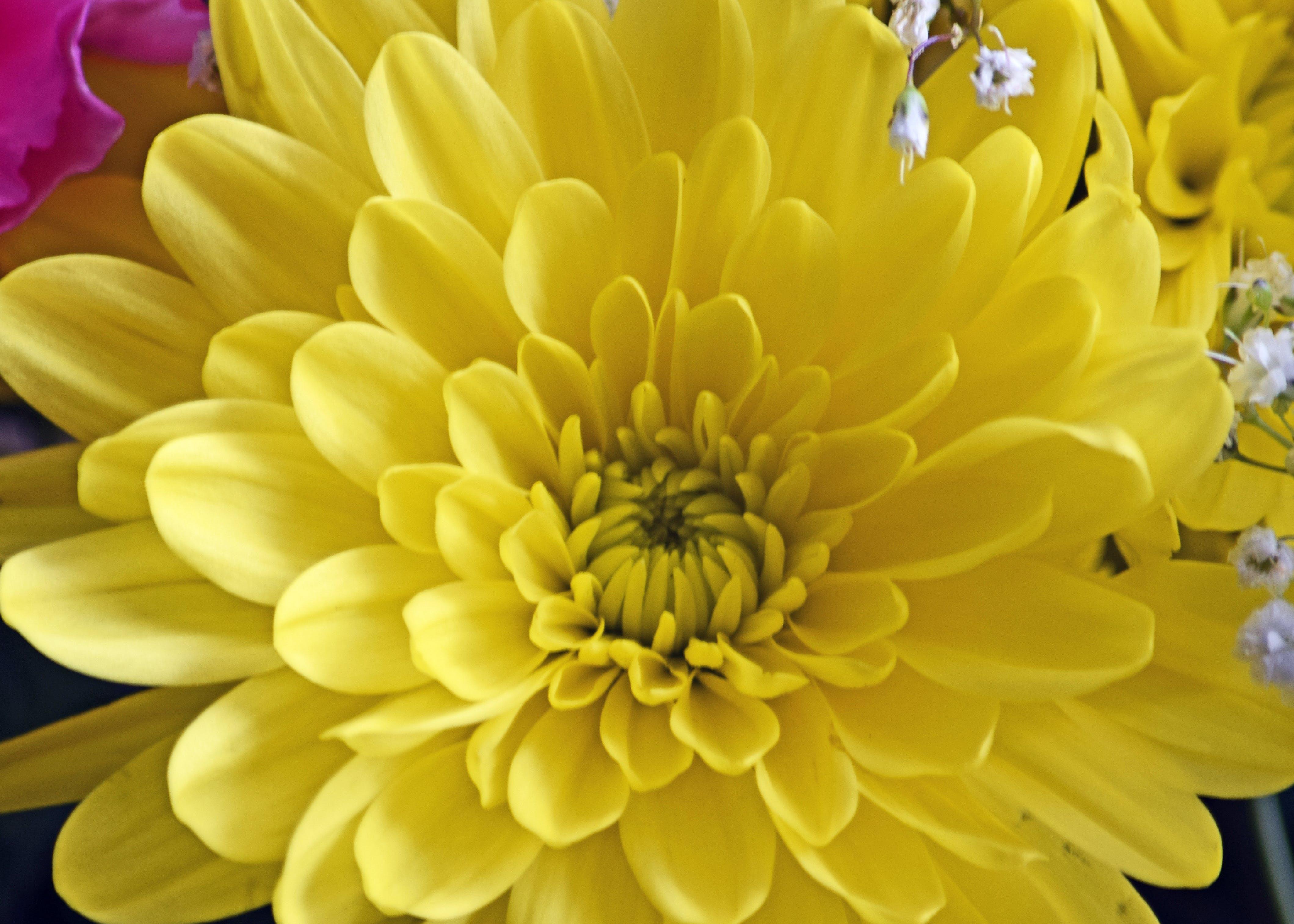 beautiful flower, flower, yellow