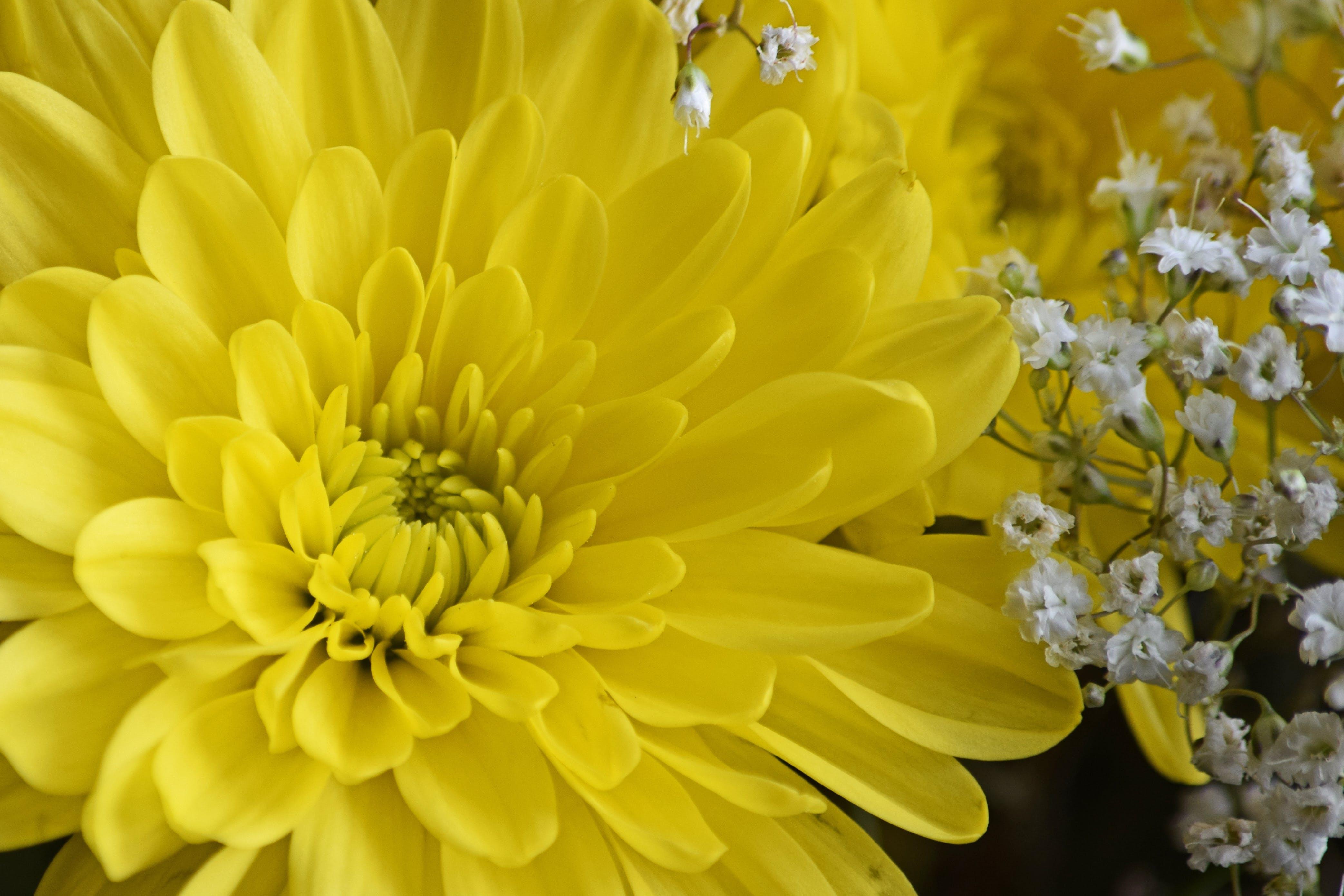 Free stock photo of beautiful flower, flower, yellow, yellow flower