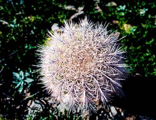 Ilmainen kuvapankkikuva tunnisteilla aavikko, arizona, kaktus, luonto