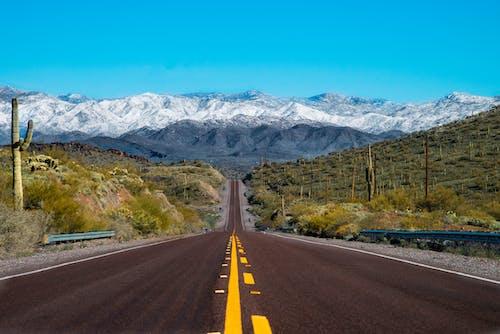 Ilmainen kuvapankkikuva tunnisteilla aavikko, horisontti, kaktus, lumi