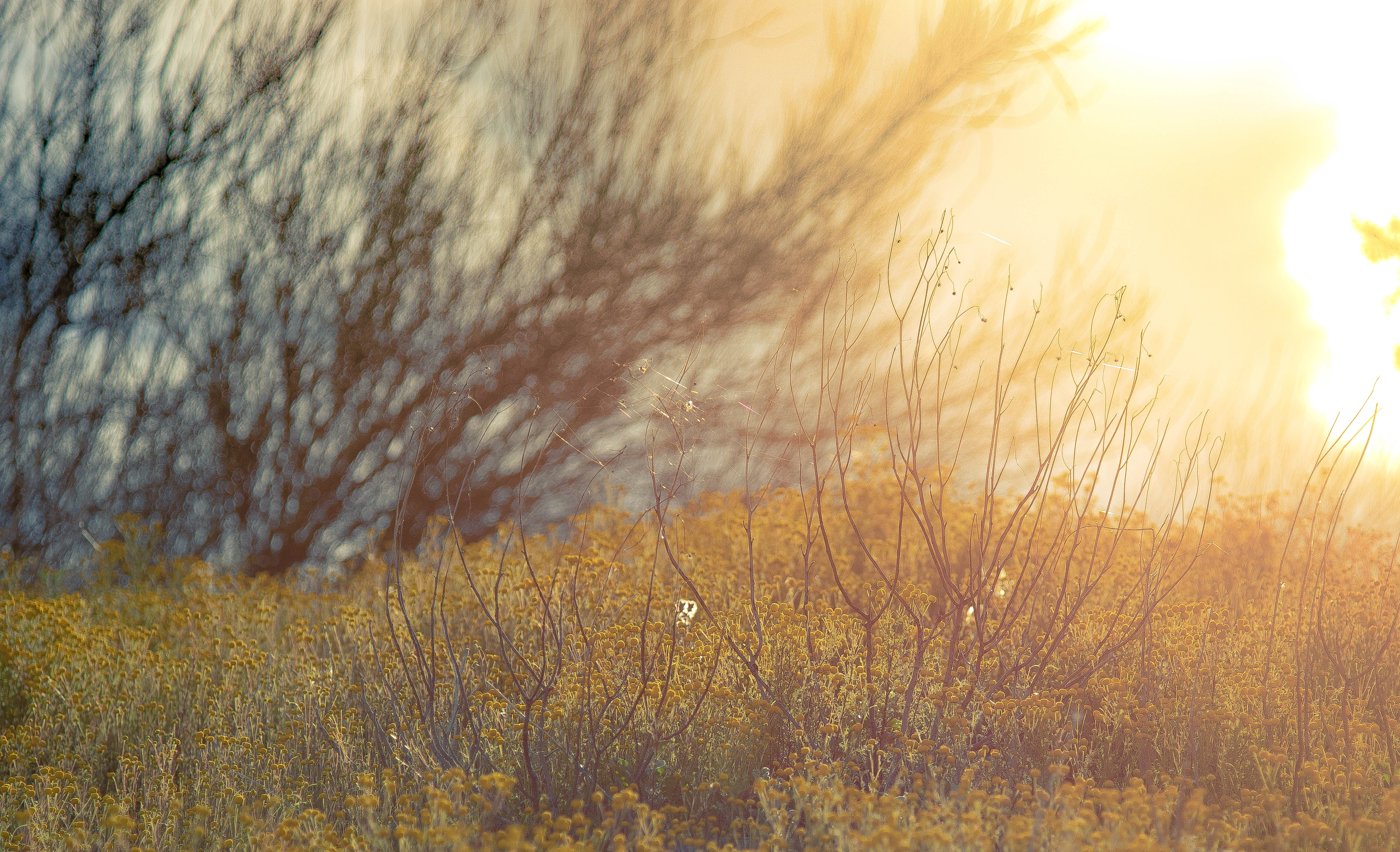 Free stock photo of field, spiderweb, spring, sunrise
