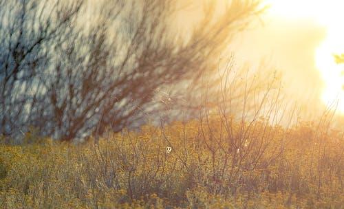 Ilmainen kuvapankkikuva tunnisteilla auringonnousu, hämähäkinverkko, kenttä, luonnonkukat