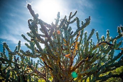 Ilmainen kuvapankkikuva tunnisteilla aavikko, arizona, kaktus, vuori