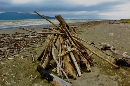 Fotobanka sbezplatnými fotkami na tému naplavené drevo, piesočnatá pláž, pláž, pri mori