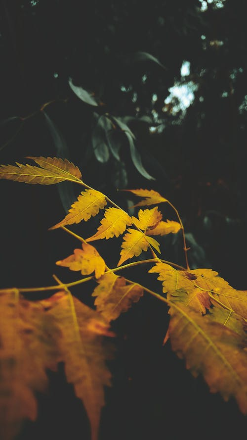 Free stock photo of leaf, nature, outdoors