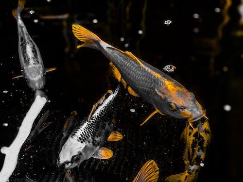 Základová fotografie zdarma na téma Adobe Photoshop, černobílý, déšť, fotografie