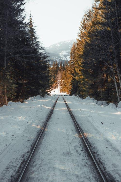 acciaio, alberi, binario ferroviario