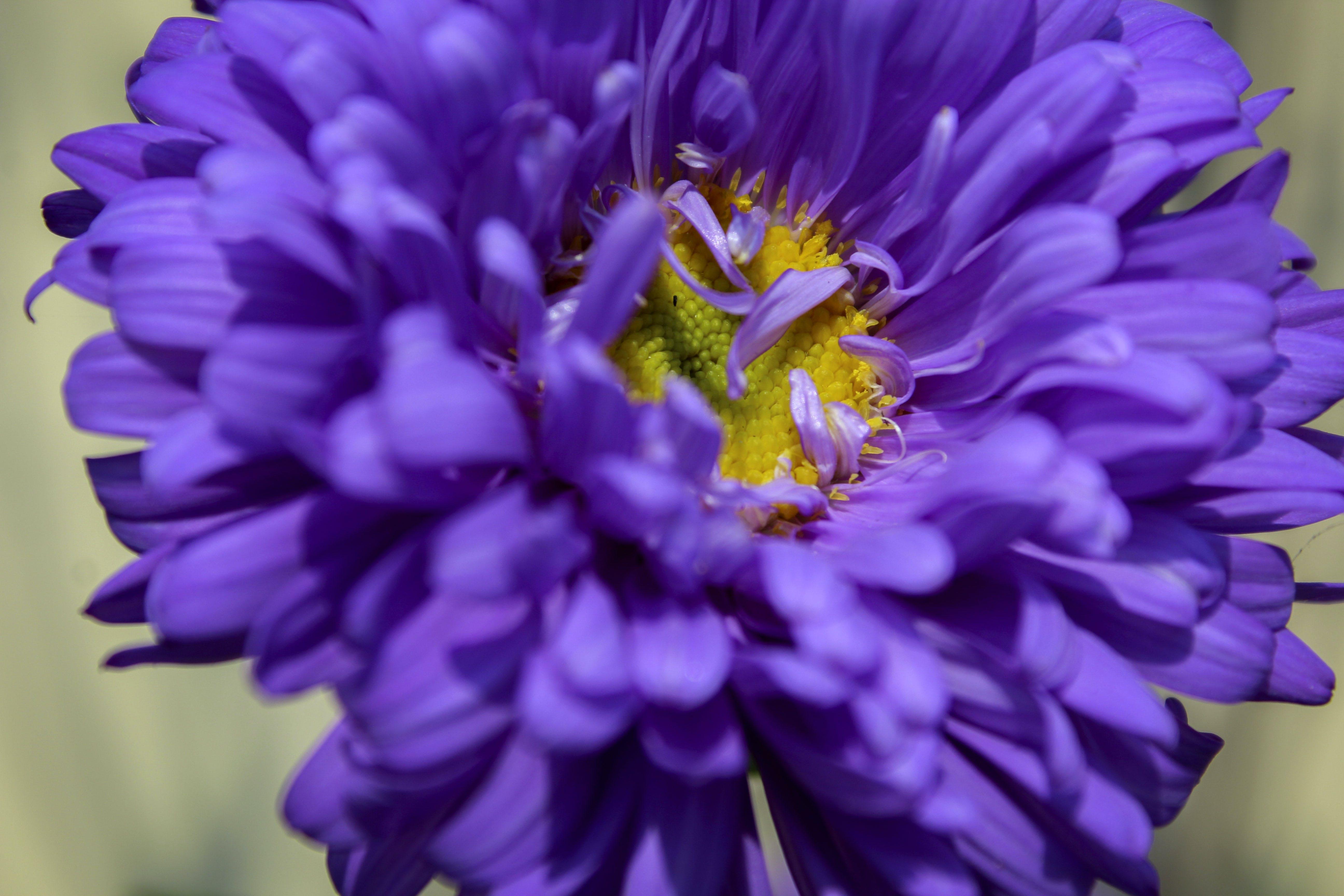 Gratis lagerfoto af blå blomster, kunstige blomster, smuk blomst