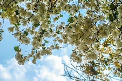 美しい花, 雲, 青空の無料の写真素材