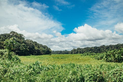 Безкоштовне стокове фото на тему «amazon, Бразилія, ліс»