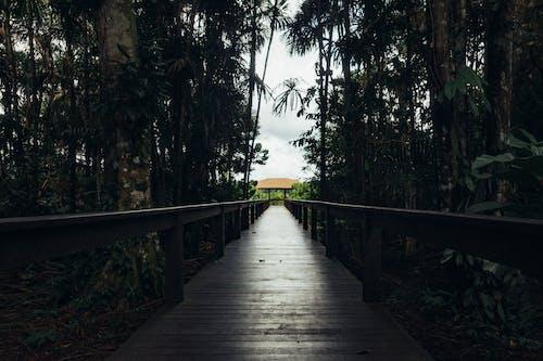 Ảnh lưu trữ miễn phí về ánh sáng ban ngày, cầu, cầu đi bộ, cây