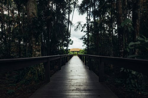 Kostenloses Stock Foto zu äste, bäume, brücke, fußgängerbrücke