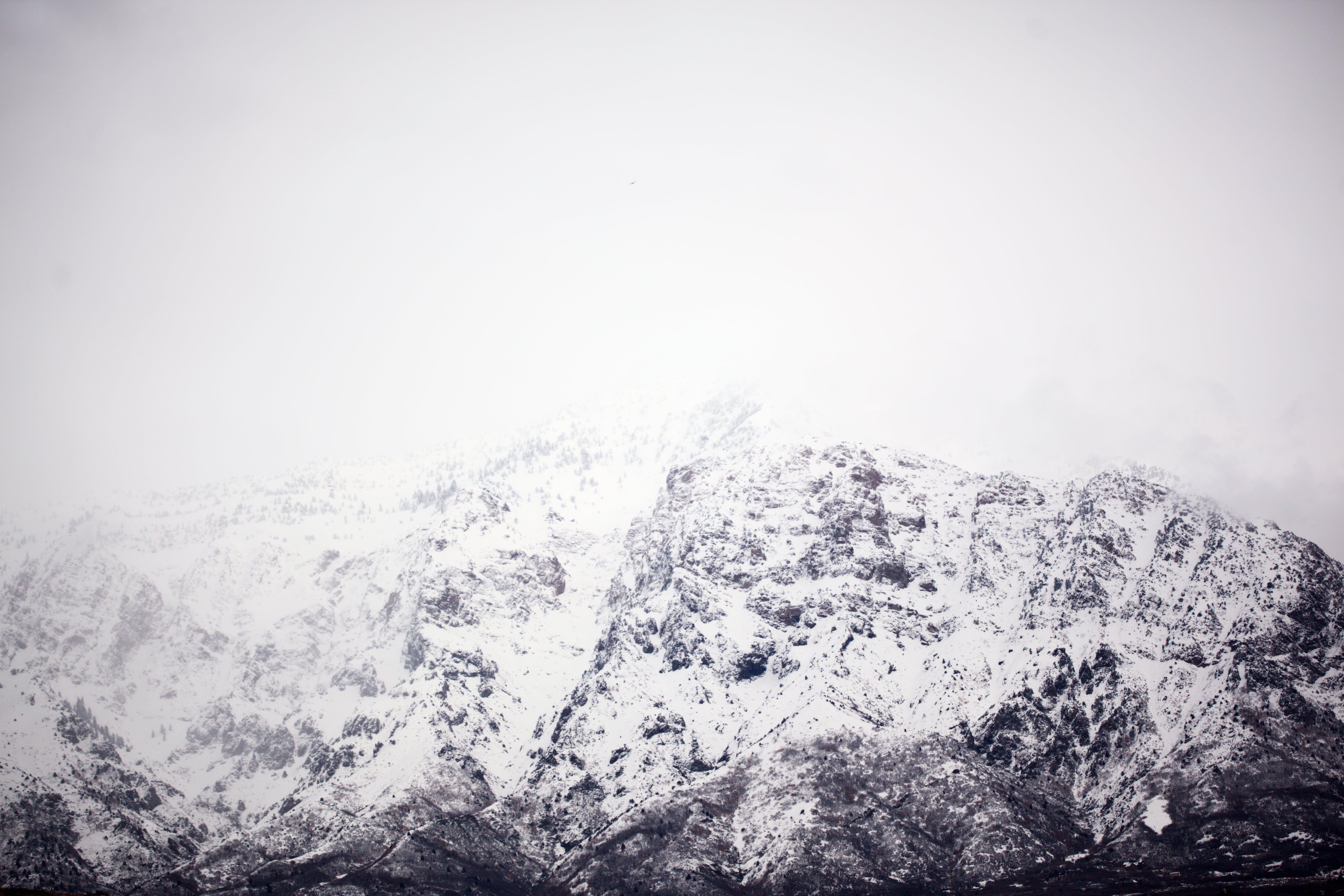 Fotobanka sbezplatnými fotkami na tému chladný, čierna a biela, deň, denné svetlo