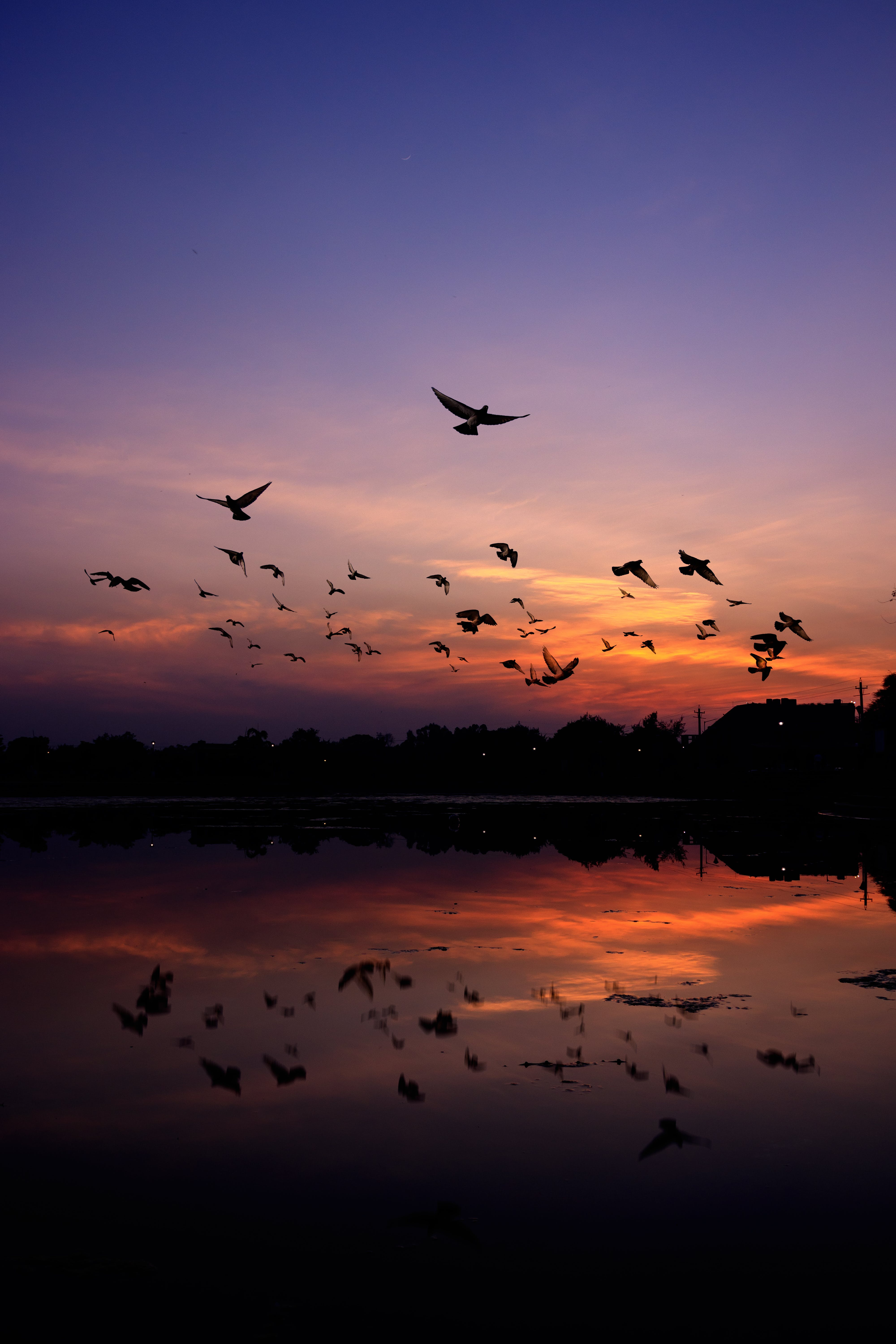 Silhouette of Mountain and Birds