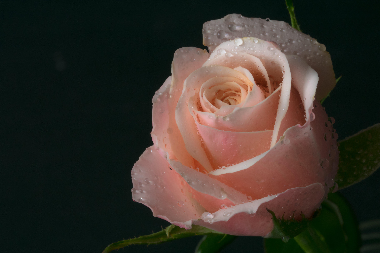 Free stock photo of background, background image, black background, close up