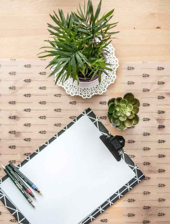 Black And White Clip Board Beside Succulent Plant