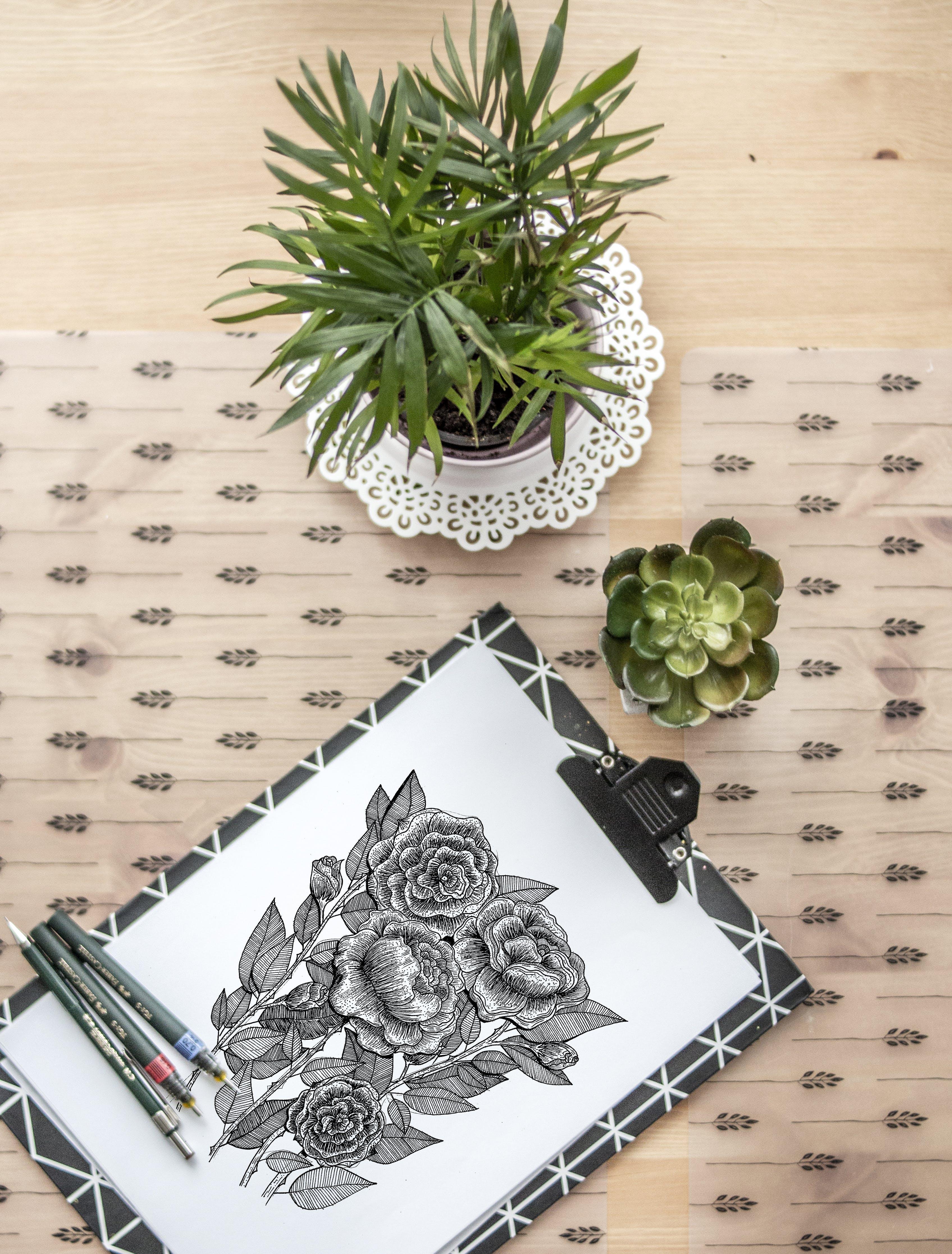 Kostenloses Stock Foto zu blume, dokument, drinnen, flora