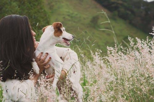 Kostnadsfri bild av avslappning, blommor, däggdjur, dagsljus