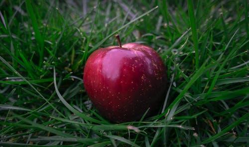 apple, çim, doğa, kırmızı içeren Ücretsiz stok fotoğraf