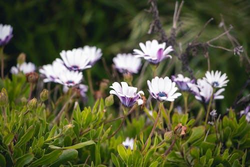 bitkiler, bulutlu, Çiçekler, doğa içeren Ücretsiz stok fotoğraf