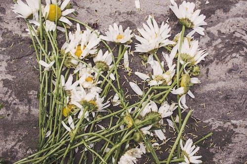 Foto stok gratis bunga-bunga, diinjak-injak, hancur, kematian