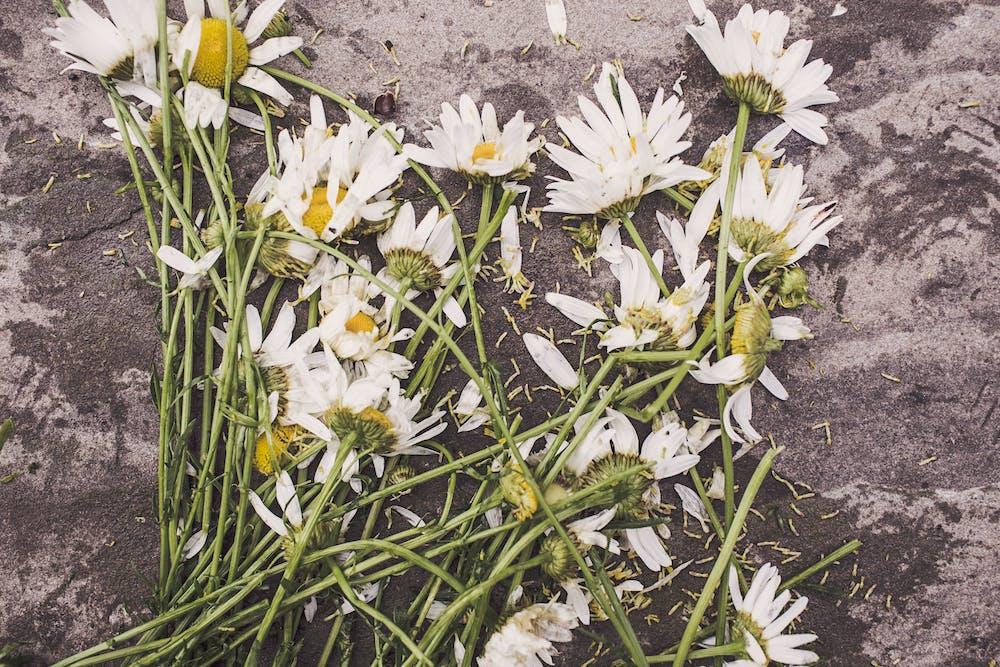 Flowers @pexels