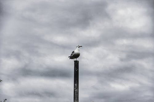 Základová fotografie zdarma na téma zvířata