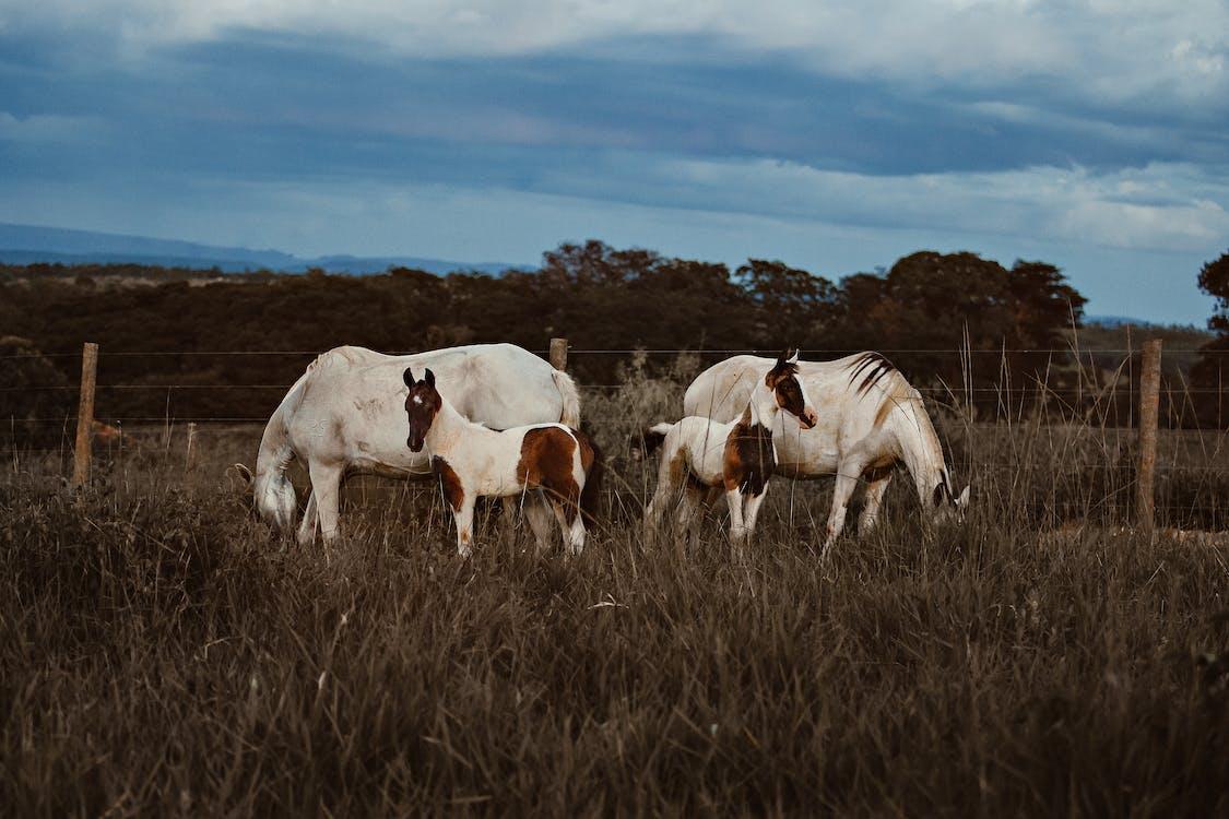 білий кінь, верховий, дерева