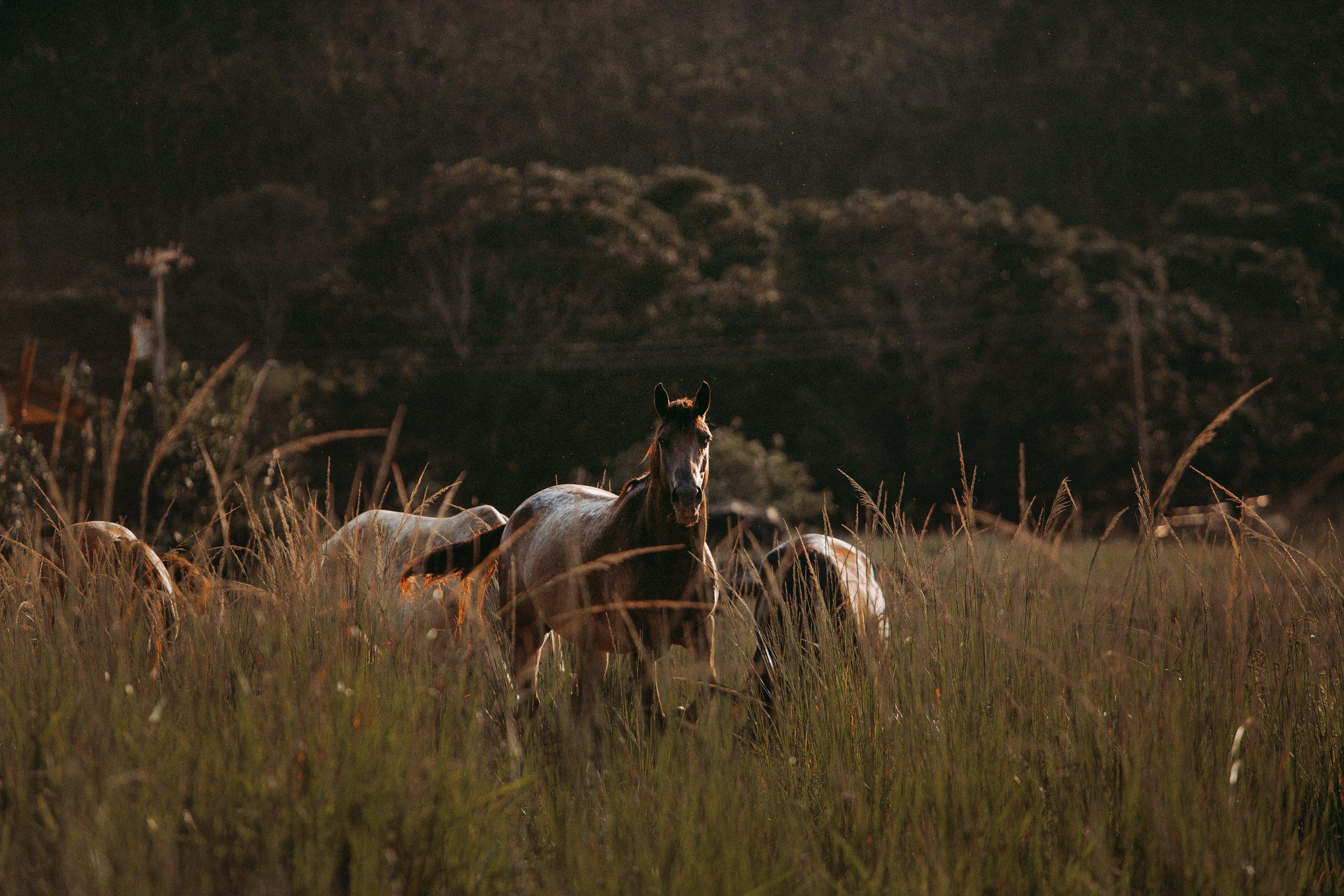 Brown Horse On Grassland
