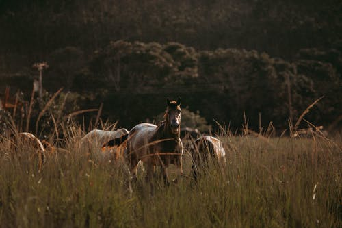 Brown Horse On Grassland