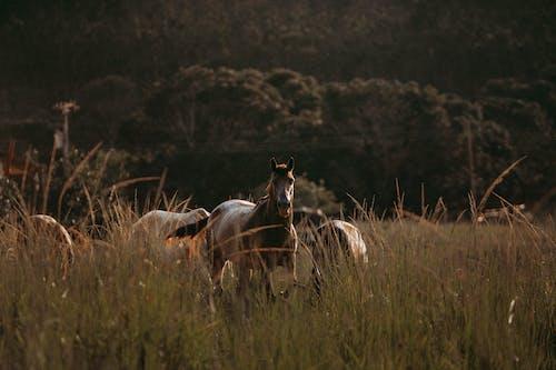 가축, 갈기, 동물, 들판의 무료 스톡 사진