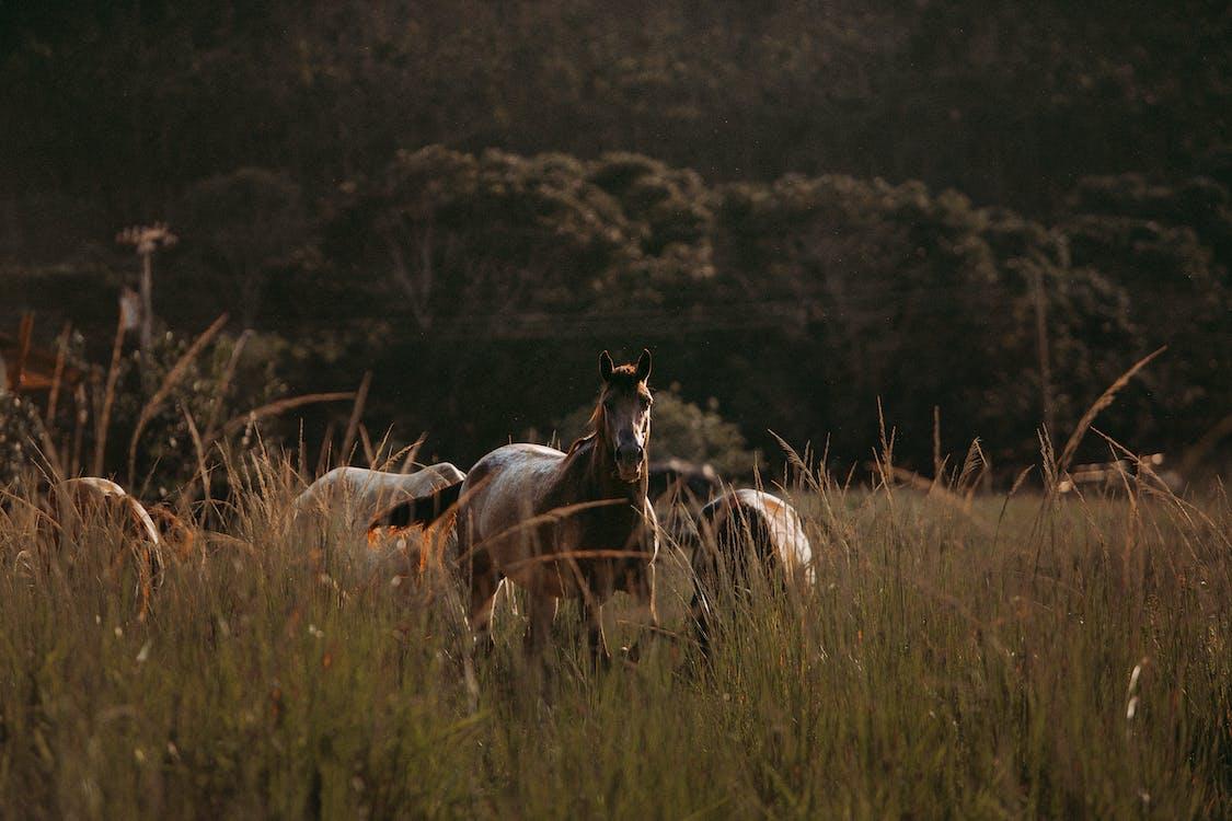 Imagine de stoc gratuită din animal, animale domestice, cabalin
