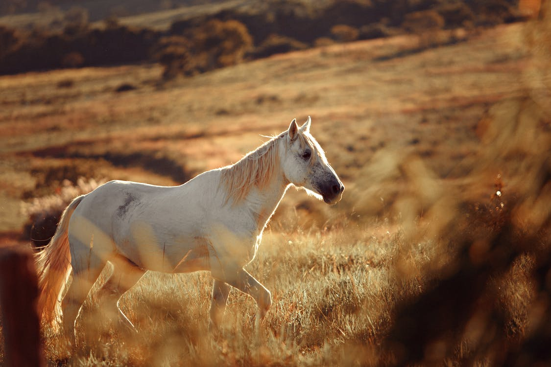 White Horse On A Field