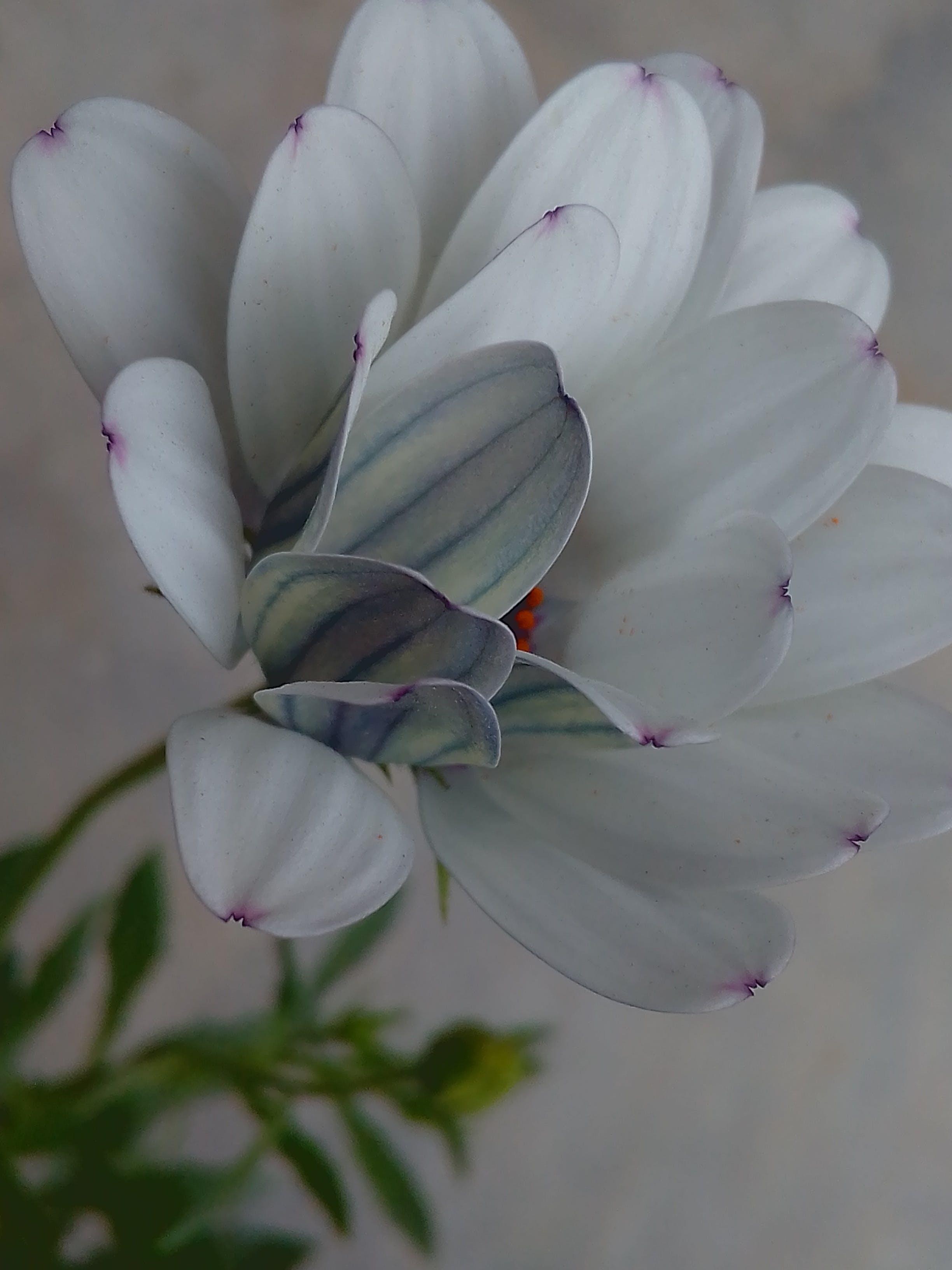Gratis lagerfoto af blomst, blomsterflora, blomstermotiv, blomstring