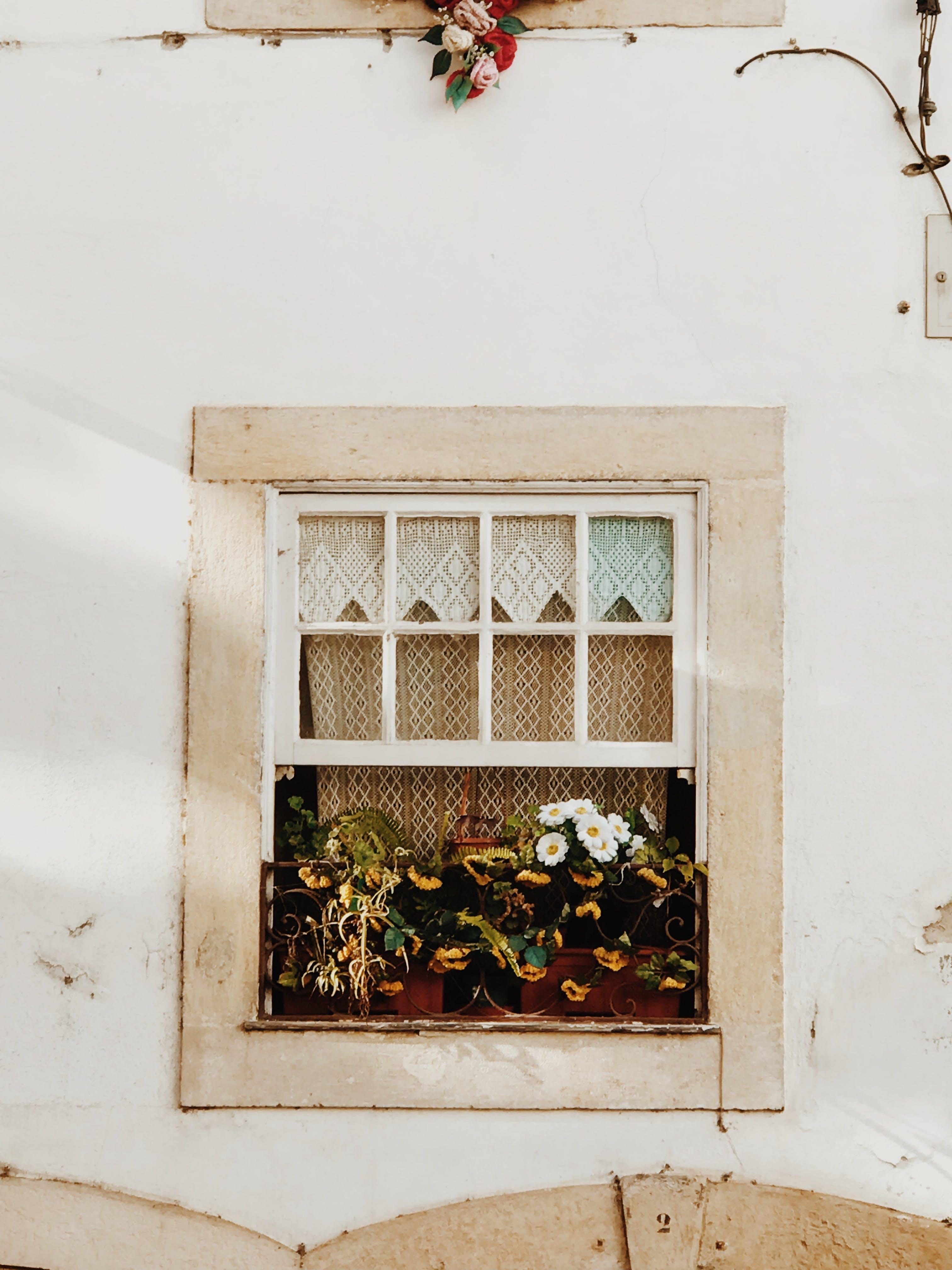 คลังภาพถ่ายฟรี ของ ผนัง, พืช