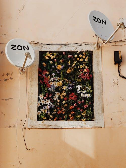 bitki örtüsü, çanak anten, Çiçekler, duvar içeren Ücretsiz stok fotoğraf