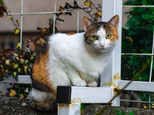 Fotos de stock gratuitas de gato