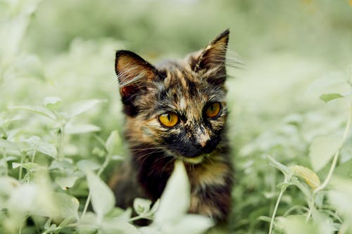 Photo of Kitten Surrounded by Plants
