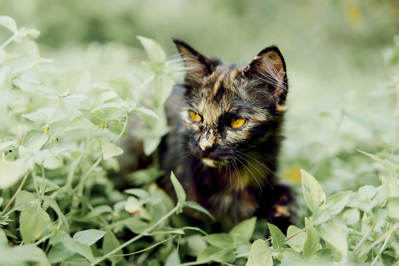 av, kedi yavrusu içeren Ücretsiz stok fotoğraf