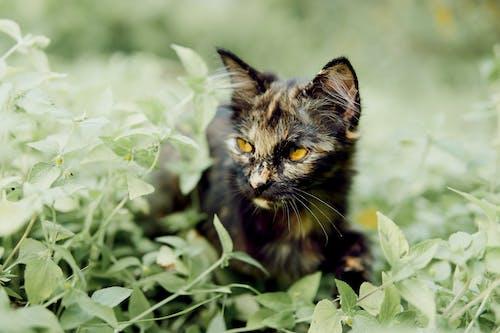 사냥, 새끼 고양이의 무료 스톡 사진