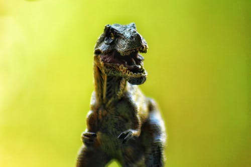 Selective Focus Photography of T-rex Toy on Green Background