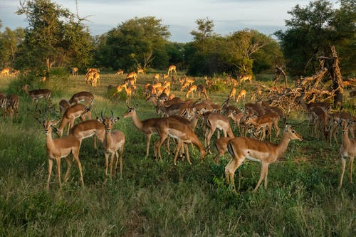 Herd Of Deer In Green Grass Field