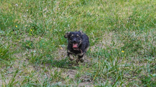 Fotos de stock gratuitas de perrito, perro