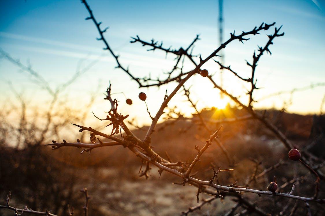 hora dorada, puesta de sol