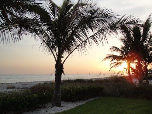 Kostenloses Stock Foto zu florida, palmen, sonnenuntergang, strand