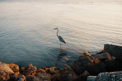 Základová fotografie zdarma na téma čeření, cestování, denní světlo, fotografování zvířat