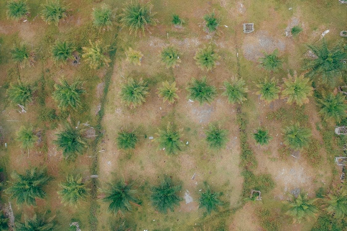 공중 촬영, 나무, 야자나무