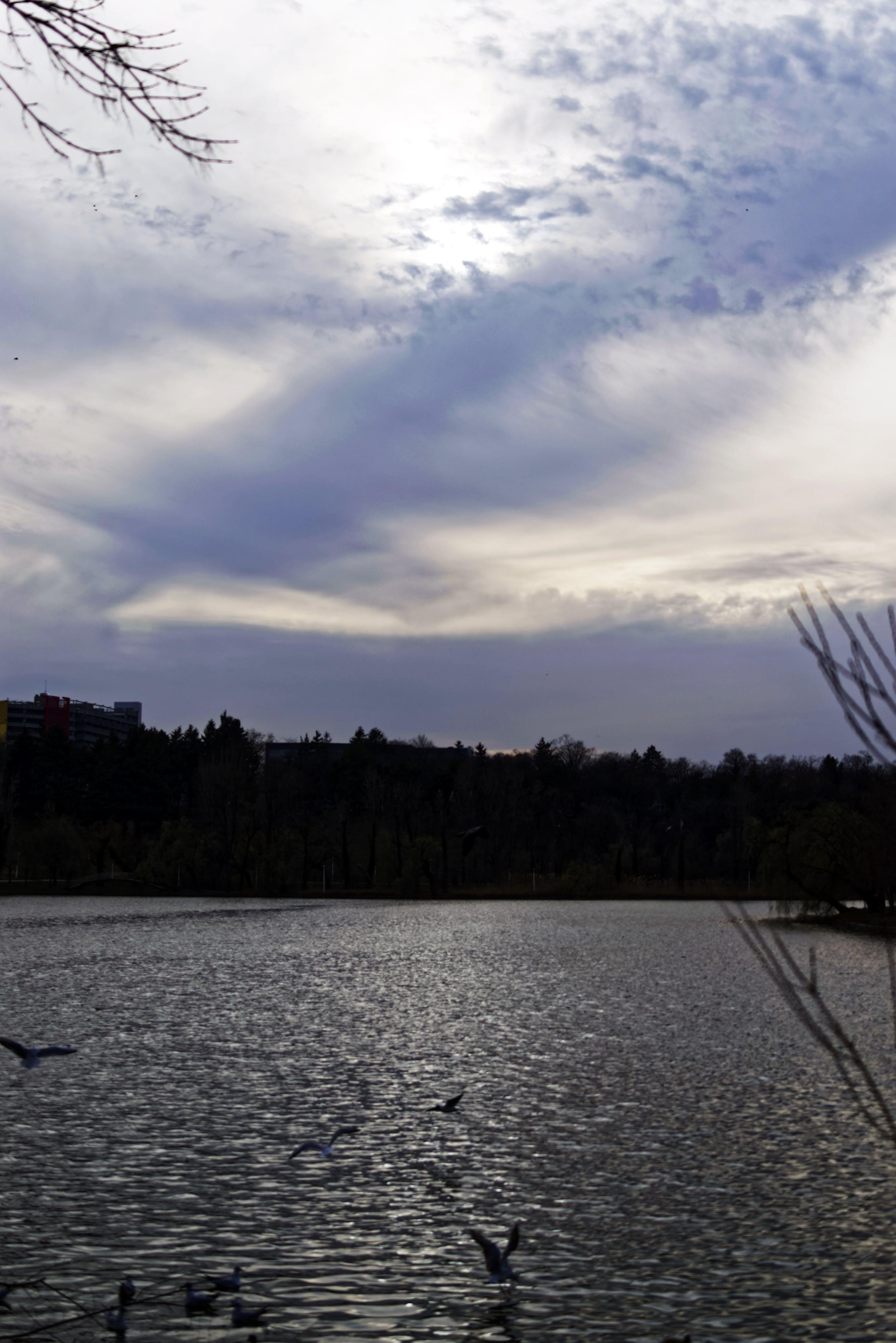 Kostenloses Stock Foto zu bäume, fliegen, himmel, natur