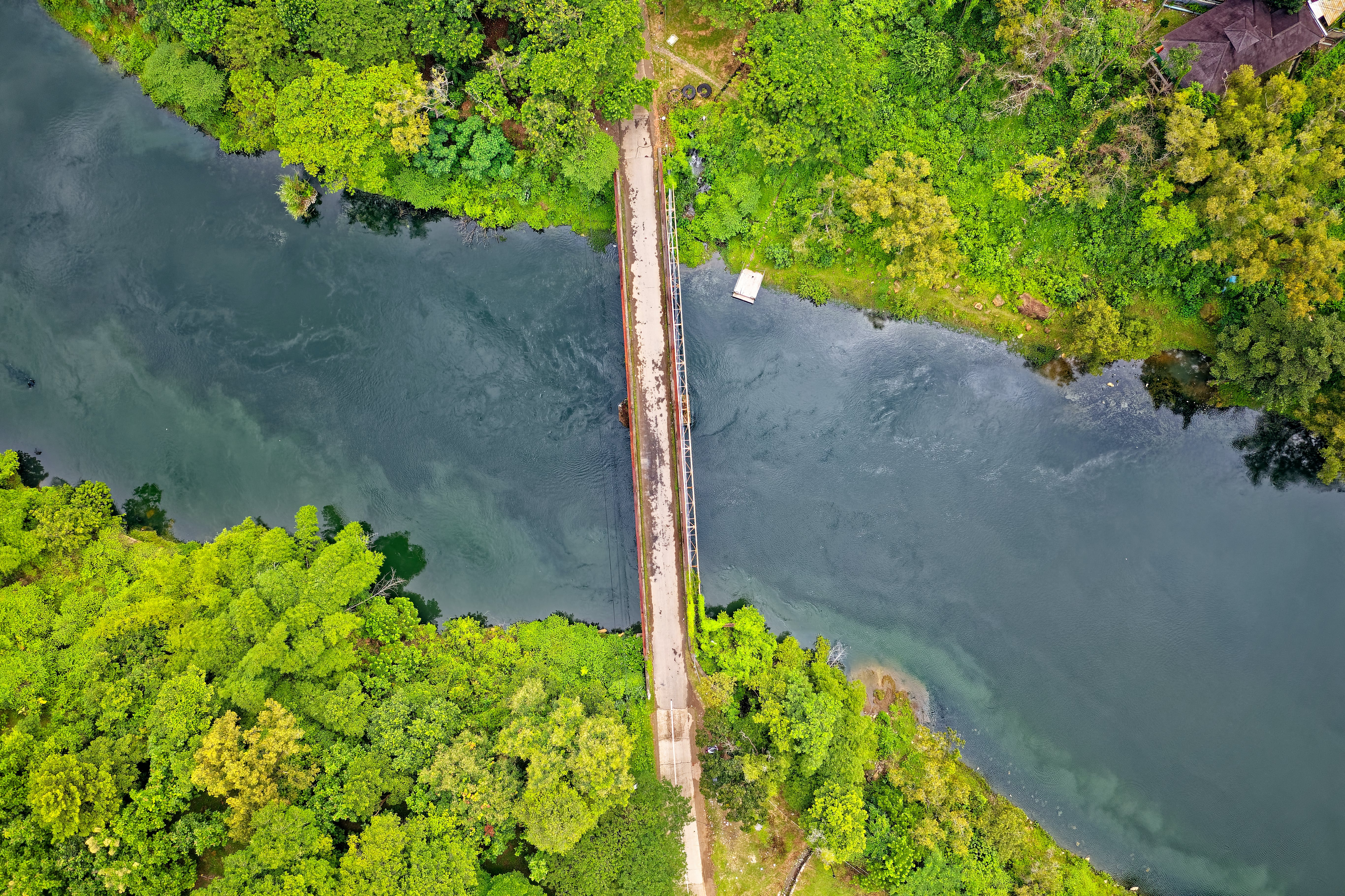Aerial Photo of River and Trees